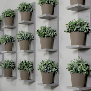 Wall-Mounted Plant Shelves